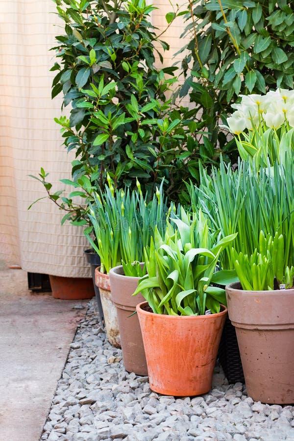 Η γωνία ενός κήπου με το σύνολο δοχείων των πράσινων εγκαταστάσεων και των λουλουδιών ανθίζει στο χαλίκι, κάθετο στοκ εικόνες