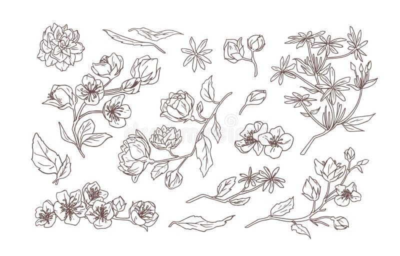 Η δέσμη των κομψών λεπτομερών φυσικών σχεδίων jasmine και της πλαστός-πορτοκαλιάς άνθισης ανθίζει και αφήνει το χέρι συρμένο με ελεύθερη απεικόνιση δικαιώματος