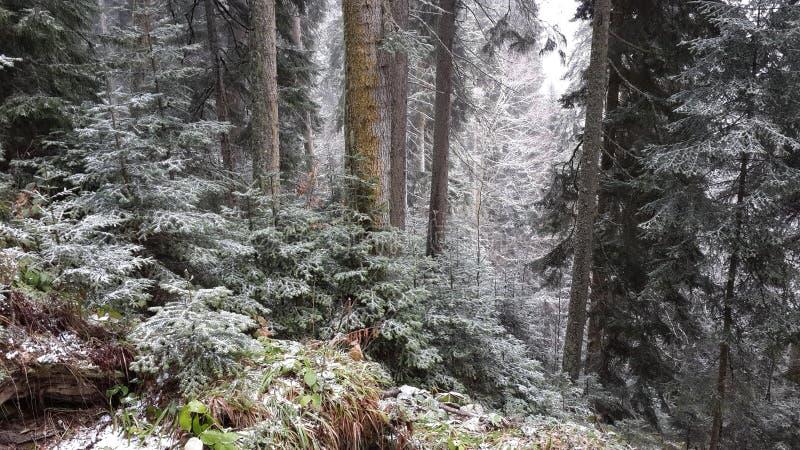 Η δασική κλίση του βουνού στο τελευταίο χιόνι στοκ εικόνες