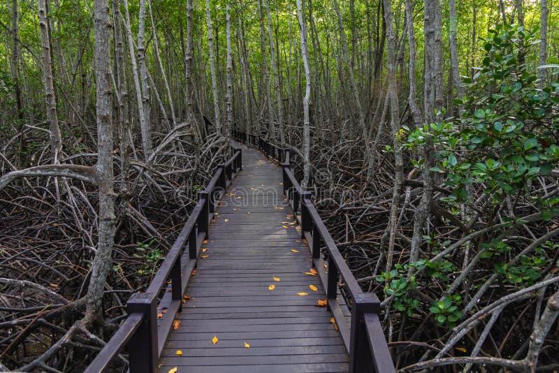 Η διάβαση πεζών στην ξύλινη γέφυρα στο δάσος στοκ εικόνες με δικαίωμα ελεύθερης χρήσης