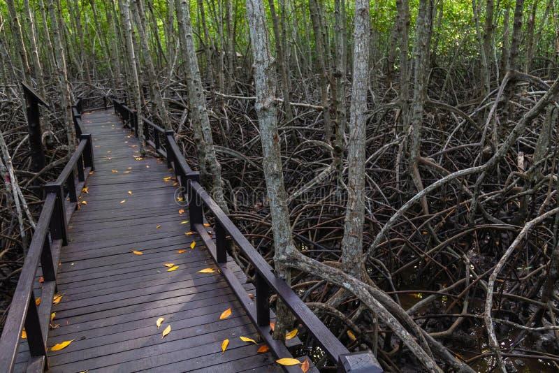 Η διάβαση πεζών στην ξύλινη γέφυρα στο δάσος στοκ εικόνα