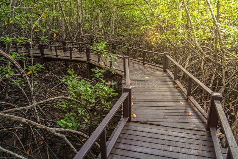 Η διάβαση πεζών στην ξύλινη γέφυρα στο δάσος στοκ εικόνες