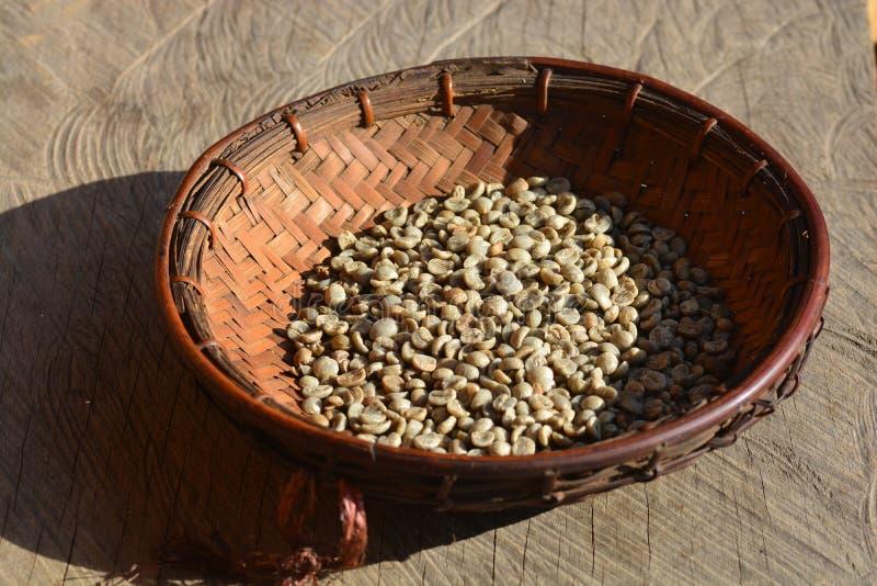 Η διαδικασία τα φασόλια καφέ ξεραίνει με τη χρησιμοποίηση του φωτός του ήλιου στοκ φωτογραφία με δικαίωμα ελεύθερης χρήσης