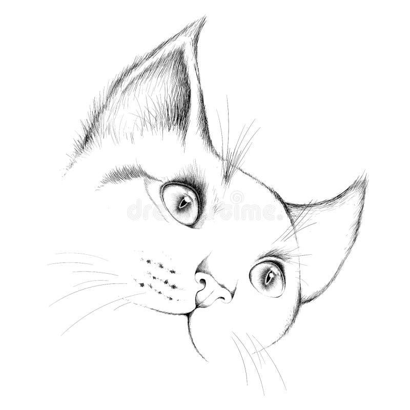 Η διανυσματική γάτα λογότυπων για την μπλούζα στοκ εικόνα με δικαίωμα ελεύθερης χρήσης
