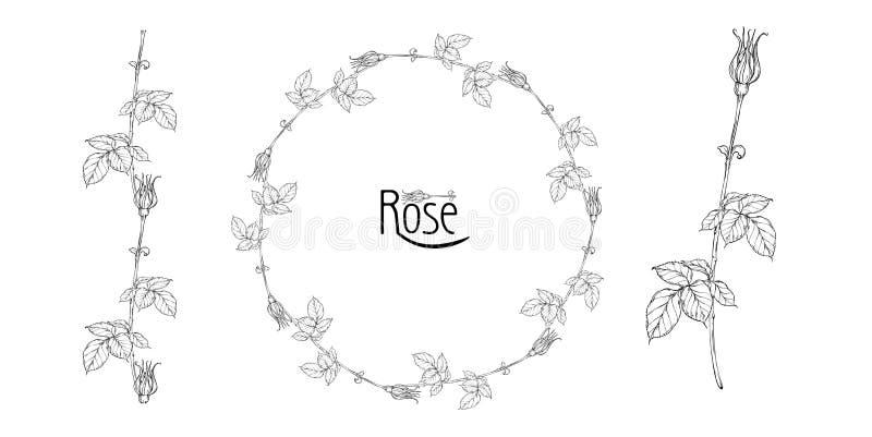 Η διανυσματική floral ρύθμιση με τα ροδαλά λουλούδια και αυξήθηκε οφθαλμοί στοκ φωτογραφίες με δικαίωμα ελεύθερης χρήσης