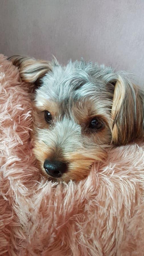 Η δορά σκυλακιών & επιδιώκει στοκ φωτογραφίες