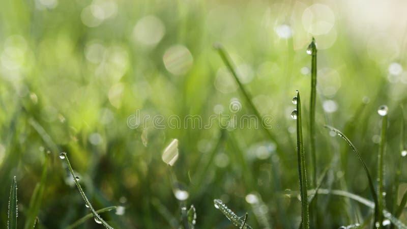 η δροσιά λεπίδων ρίχνει τη χλόη στοκ εικόνες