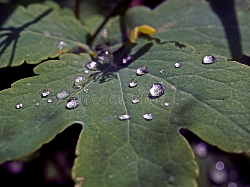 Η δροσιά πρωινού στα φύλλα απεικονίζει τις ακτίνες του ήλιου στοκ φωτογραφία με δικαίωμα ελεύθερης χρήσης