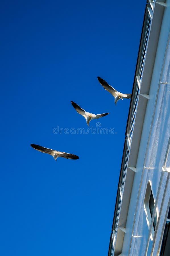 Η εικόνα γίνεται κατά τη διάρκεια του ταξιδιού πέρα από τη θάλασσα της Βαλτικής με το σκάφος μηχανών στοκ φωτογραφία με δικαίωμα ελεύθερης χρήσης