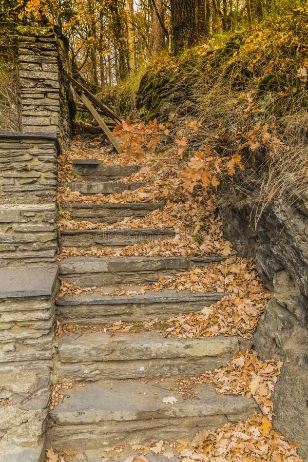 Η εικόνα των σκαλοπατιών πετρών με πολλά ξηρά φύλλα και εμποδισμένος με το δέντρο διακλαδίζεται στοκ φωτογραφίες με δικαίωμα ελεύθερης χρήσης