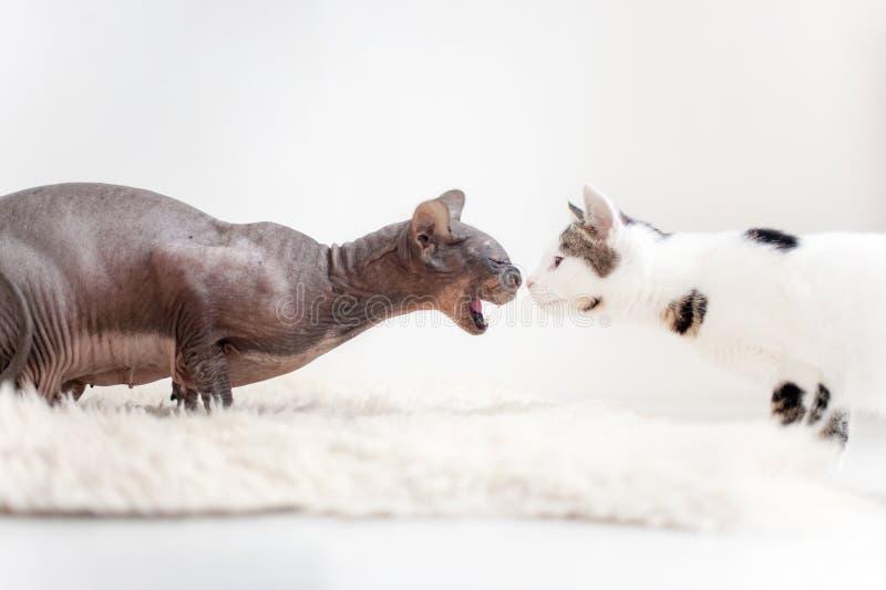 Η εκδήλωση της επιθετικότητας στα ζώα στοκ φωτογραφίες με δικαίωμα ελεύθερης χρήσης