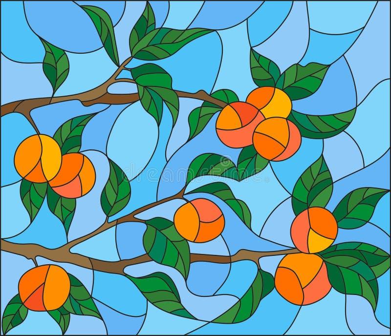 Η λεκιασμένη απεικόνιση γυαλιού με τους κλάδους του πορτοκαλιού δέντρου, τα φρούτα διακλαδίζεται και φεύγει ενάντια στον ουρανό απεικόνιση αποθεμάτων