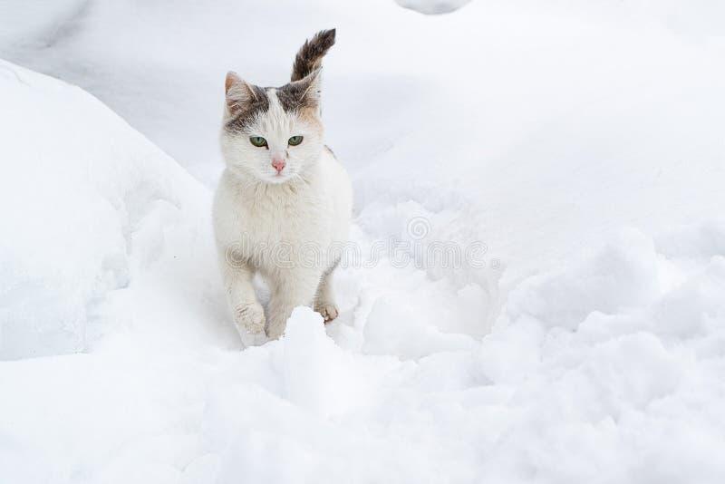 Η ελαφριά γάτα γλιστρά μέσω του χιονιού snowdrift στοκ εικόνα