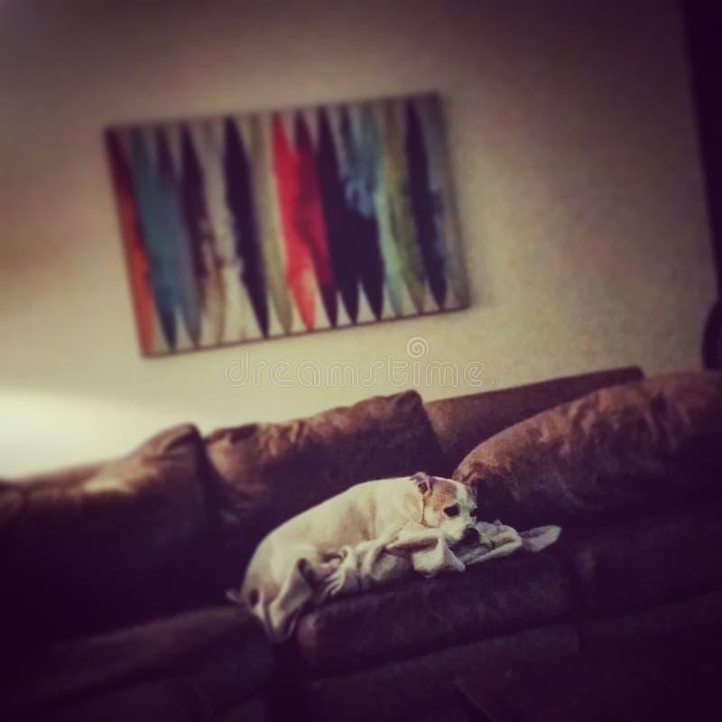 Η εξαντλημένη Roxy στοκ φωτογραφίες με δικαίωμα ελεύθερης χρήσης