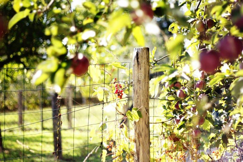 Η εποχή μήλων στοκ εικόνα με δικαίωμα ελεύθερης χρήσης