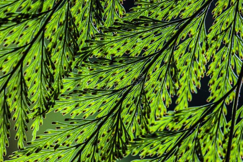 Η λεπτομέρεια βγάζει φύλλα στοκ φωτογραφίες
