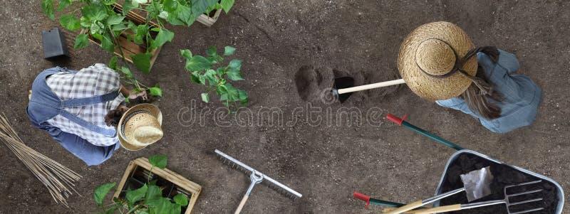 Η εργασία μαζί κηπουρικής ανδρών και γυναικών στον άνδρα φυτικών κήπων τοποθετεί εγκαταστάσεις στη σκαπάνη εδάφους και γυναικών τ στοκ εικόνες