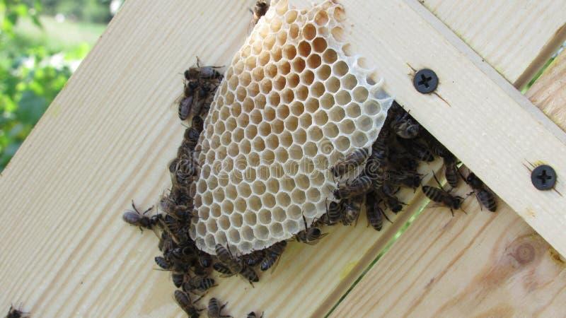Η εργασία των μελισσών Σπίτι μελισσών στοκ εικόνα