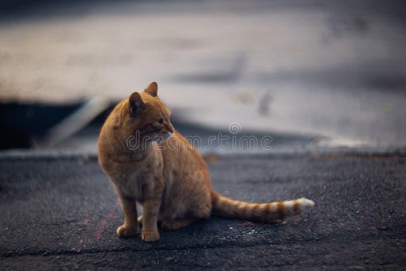 Η ευμετάβλητη άστεγη μαύρη γάτα εξετάζει σας σε μια μεγάλη πόλη στοκ φωτογραφίες