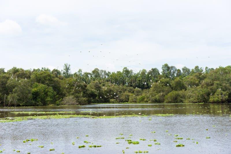 Η ευρεία άποψη Tra SU πλημμύρισε το δάσος εγκαταστάσεων λουλακιού, με το πετώντας κοπάδι του πελαργού σε ένα Giang, Mekong δέλτα, στοκ φωτογραφίες