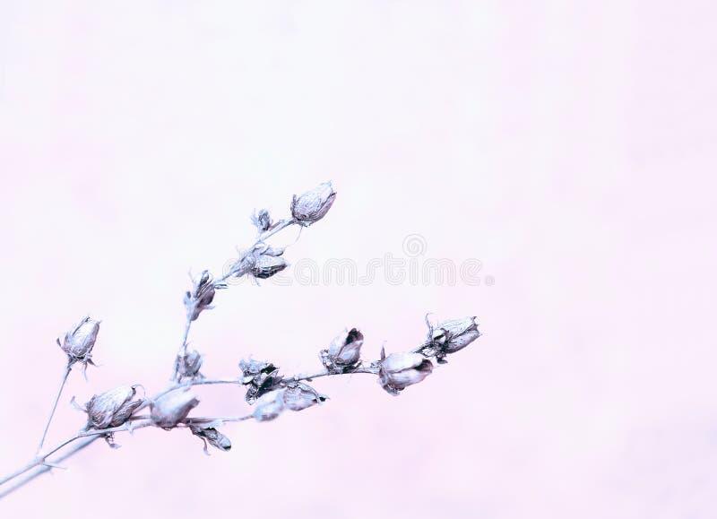 Η ελαφριά πασχαλιά θόλωσε το Floral υπόβαθρο στοκ εικόνες