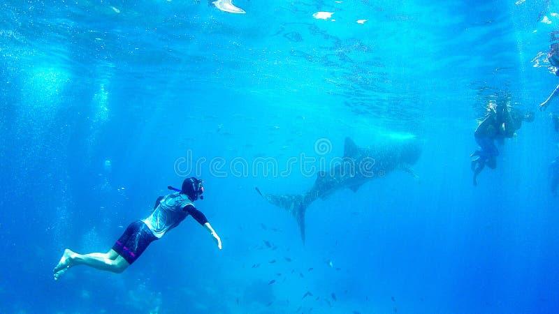 Η ελεύθερη κατάδυση κολύμβησης με αναπνευστήρα των Φιλιππινών Κεμπού προσέχει το whaleshark στοκ εικόνες με δικαίωμα ελεύθερης χρήσης