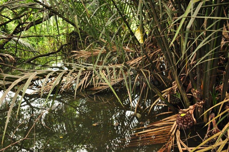 Η ζούγκλα στην Ινδονησία Ιάβα Οι φτέρες και οι φοίνικες δέντρων στις κλίσεις του shit στοκ εικόνα