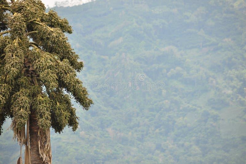 Η ζούγκλα στην Ινδονησία Ιάβα Οι φτέρες και οι φοίνικες δέντρων στις κλίσεις του shit στοκ φωτογραφία με δικαίωμα ελεύθερης χρήσης