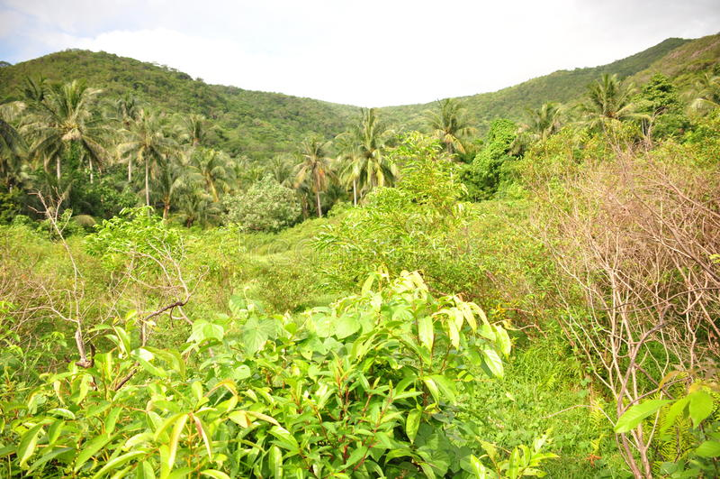 Η ζούγκλα στην Ινδονησία Ιάβα Οι φτέρες και οι φοίνικες δέντρων στις κλίσεις του shit στοκ εικόνες με δικαίωμα ελεύθερης χρήσης
