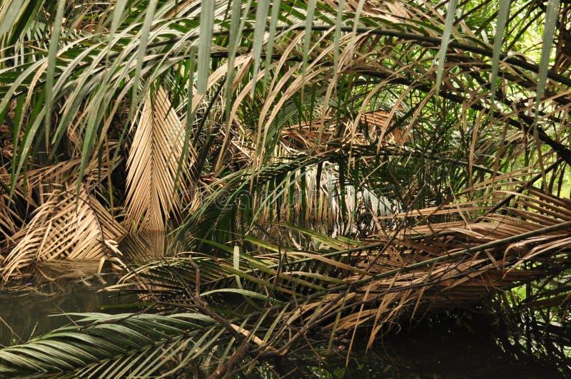 Η ζούγκλα στην Ινδονησία Ιάβα Οι φτέρες και οι φοίνικες δέντρων στις κλίσεις του shit στοκ εικόνες