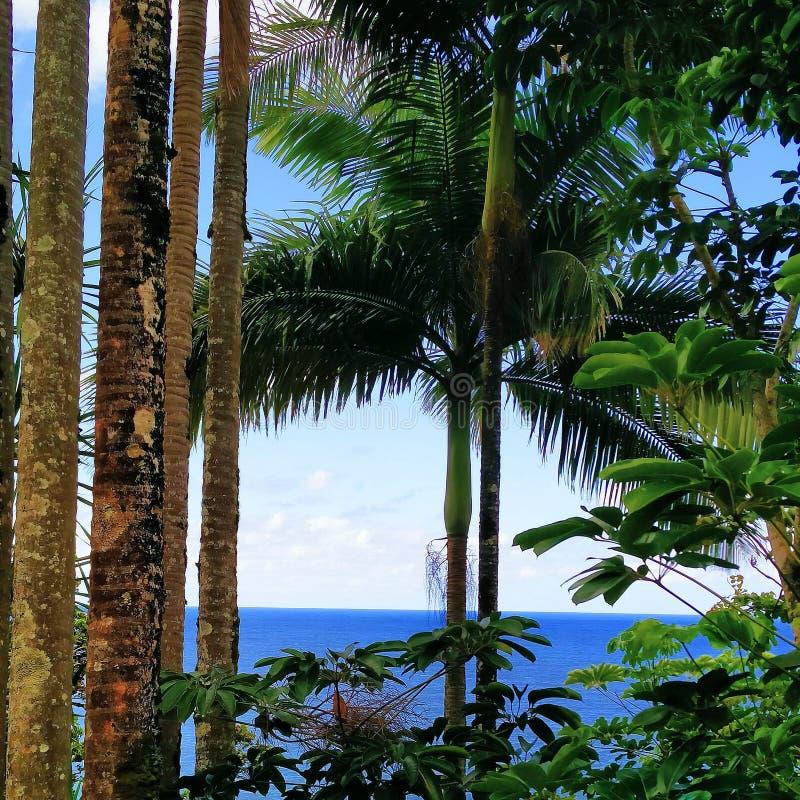 Η ζούγκλα στοκ φωτογραφία με δικαίωμα ελεύθερης χρήσης