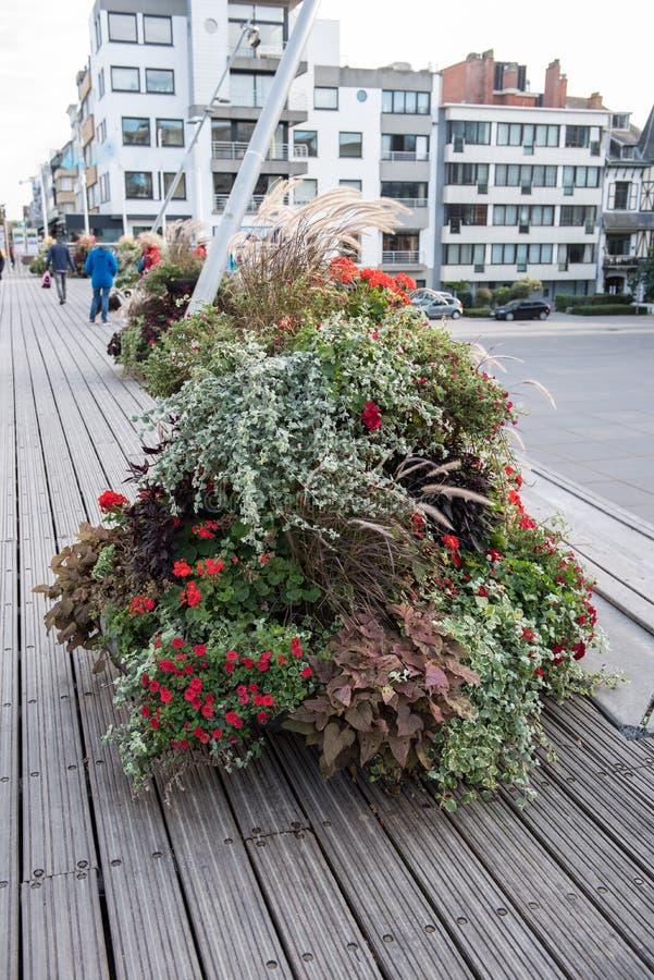 Η ζωηρόχρωμη διακόσμηση λουλουδιών ξύλινα floorboards σε Koksijde, είναι στοκ φωτογραφίες