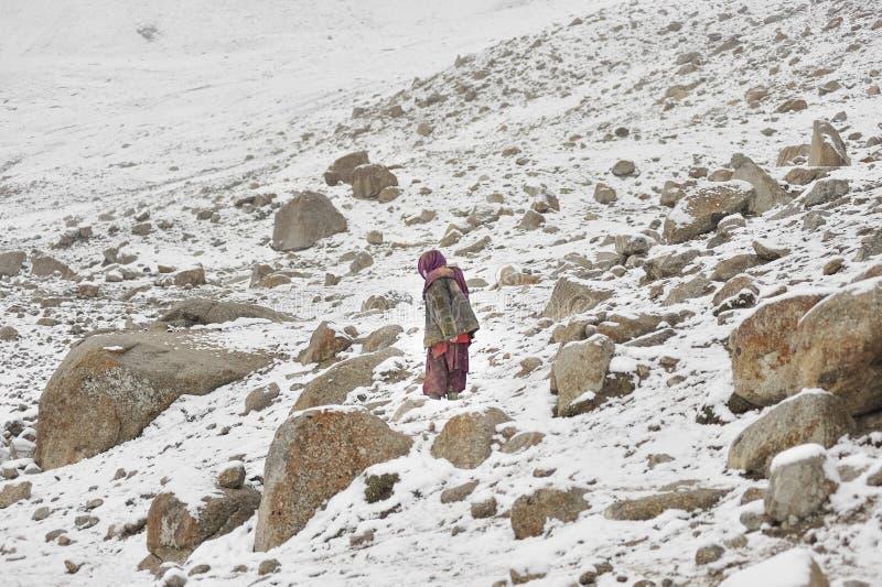 Η ηλικιωμένη κυρία αναρριχείται στις επικίνδυνες περιοχές για να φέρει κατ' οίκον χαμένη yaks στοκ εικόνα με δικαίωμα ελεύθερης χρήσης