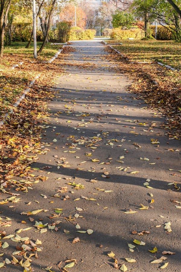 Η ηλιοφώτιστη ασφαλτωμένη αλέα πόλεων, που καλύπτεται με τα φύλλα φθινοπώρου, και σκιάζει από τα δέντρα σε το στοκ εικόνα