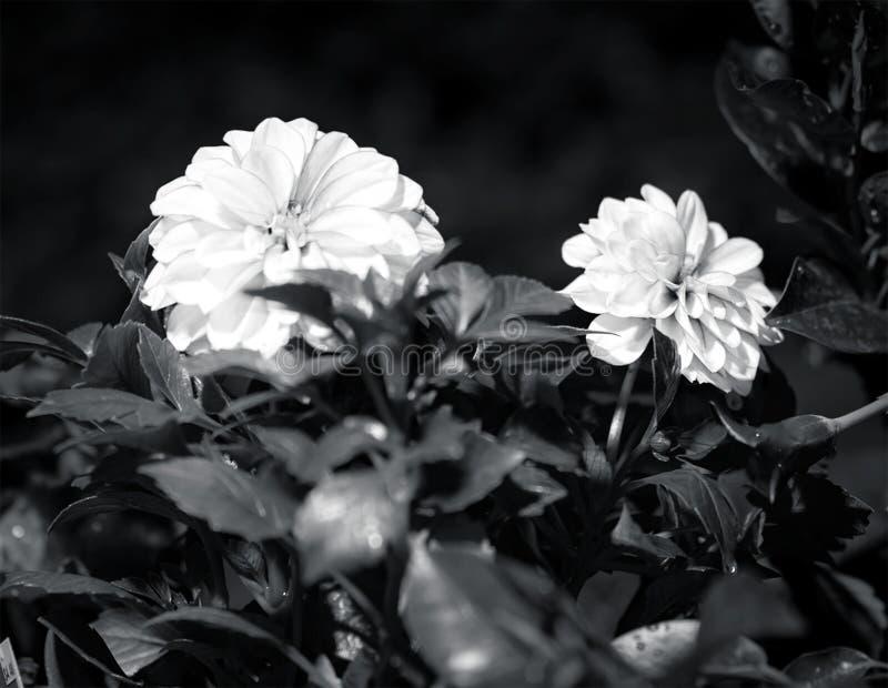 Η ημέρα φύτεψα τα λουλούδια στοκ εικόνα