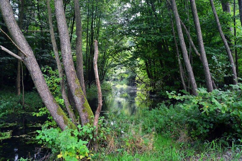 Η ηρεμία ποταμών στοκ εικόνα με δικαίωμα ελεύθερης χρήσης