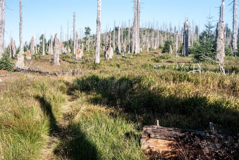 Η διάβαση συνόρων με το δάσος πέθανε οφειλόμενος να αποφλοιώσει την προσβολή κανθάρων στα βαυαρικά δασικά βουνά Sumava στοκ φωτογραφίες με δικαίωμα ελεύθερης χρήσης