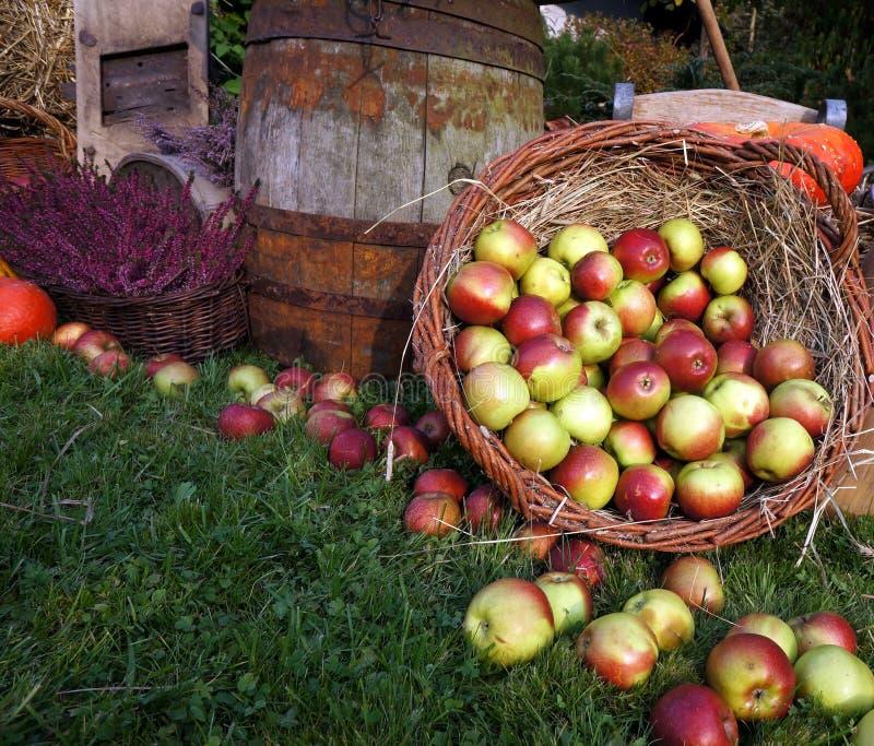 Η διακόσμηση φθινοπώρου, το ξύλινο βαρέλι, τα κόκκινα και πράσινα μήλα σε ένα ψάθινο καλάθι στο άχυρο, κολοκύθες, κολοκύνθη, ερεί στοκ φωτογραφίες