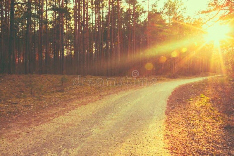 Ηλιαχτίδες ηλιοβασιλέματος δασικών δρόμων στοκ φωτογραφίες