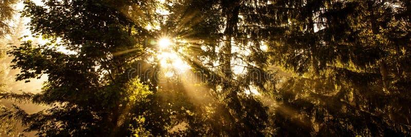 Ηλιαχτίδες μεταξύ των σκοτεινών έλατων, πανόραμα στοκ εικόνα με δικαίωμα ελεύθερης χρήσης