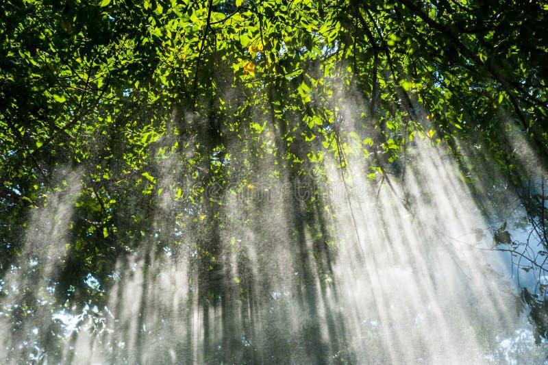 Ηλιαχτίδες ντους άνοιξη στοκ φωτογραφία