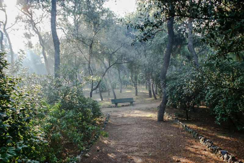 Ηλιαχτίδες στο πάρκο στοκ φωτογραφίες