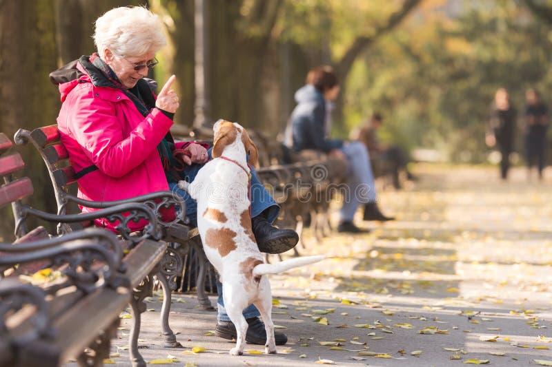 Ηλικιωμένη γυναίκα με ένα σκυλί στοκ εικόνες
