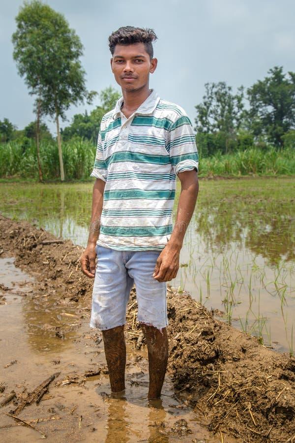 Η ινδική Farmer στον τομέα ορυζώνα στοκ φωτογραφία