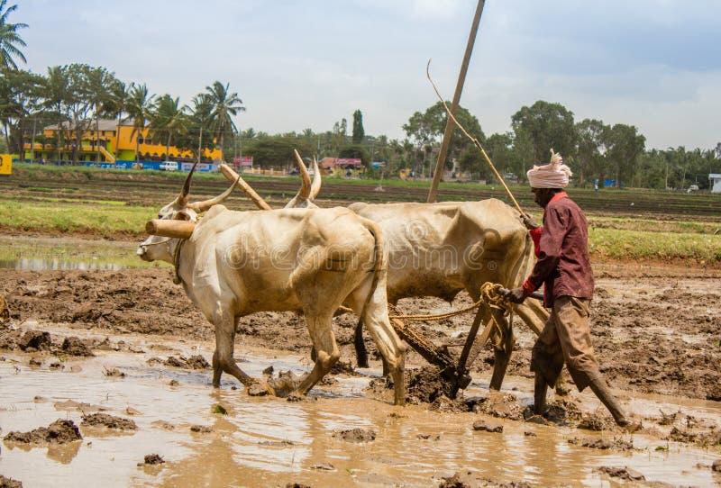 Η ινδική Farmer στοκ εικόνες