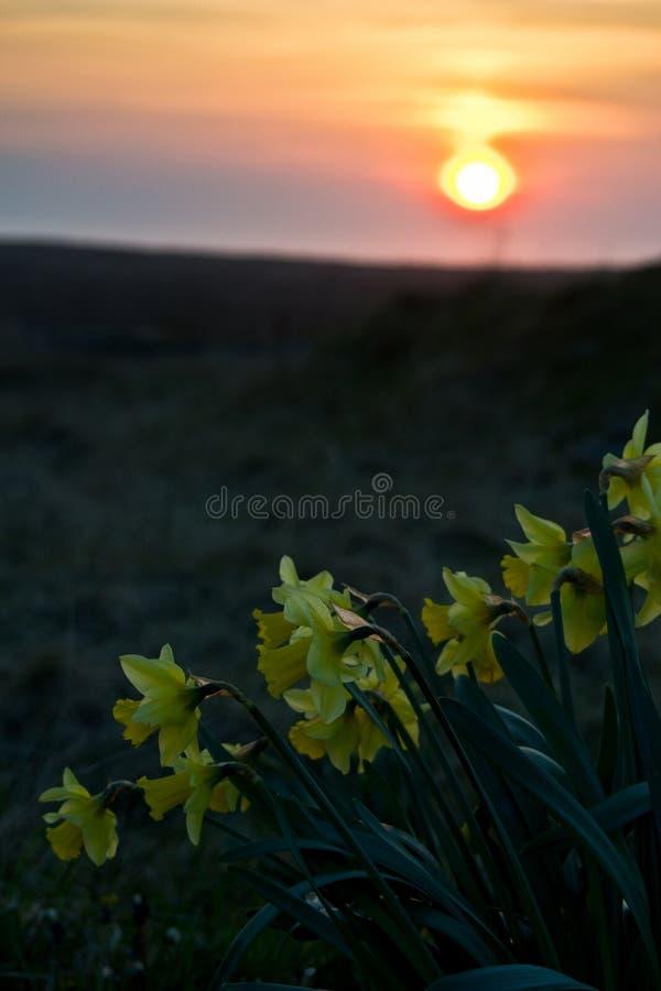 Ηλιοβασίλεμα άνοιξη στοκ φωτογραφία