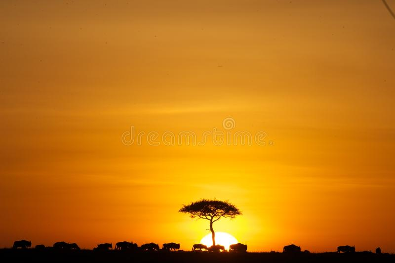 Ηλιοβασίλεμα από το βασιλιά λιονταριών στοκ εικόνες