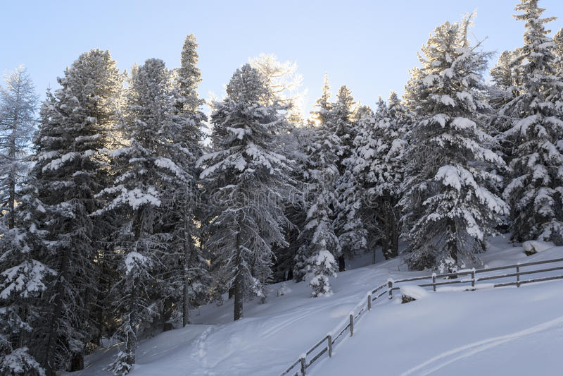 Ηλιοβασίλεμα για το χιονισμένο δάσος στοκ εικόνες