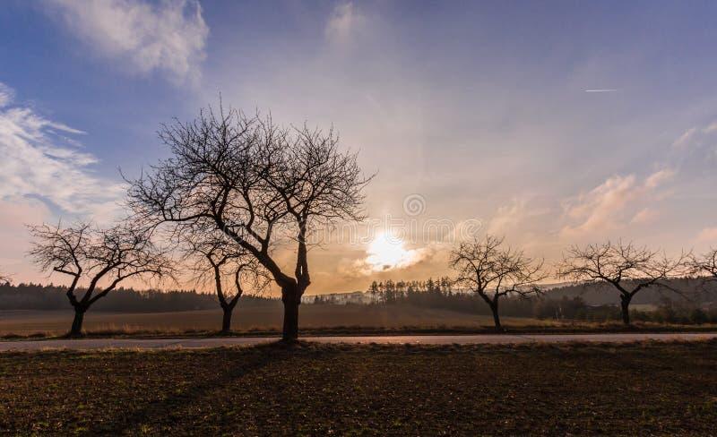 Ηλιοβασίλεμα και σκιαγραφίες των δέντρων στοκ φωτογραφίες
