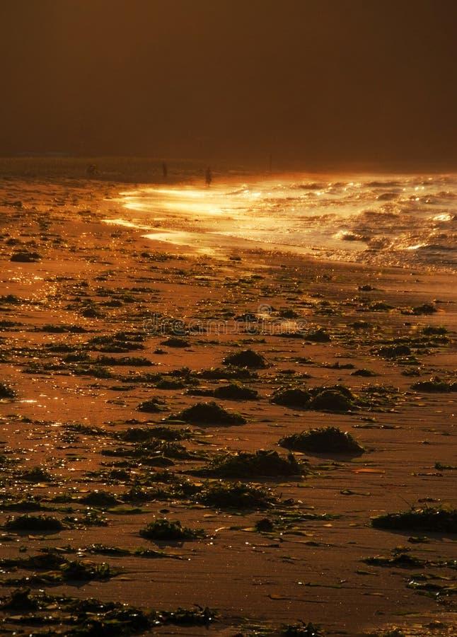 Ηλιοβασίλεμα και χρυσά κύματα, φως, παραλία, θάλασσα της Ιαπωνίας μετά από τη θύελλα, στοκ εικόνα